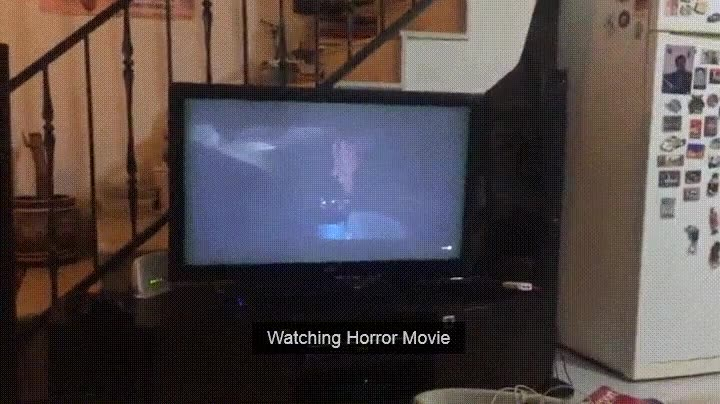 Enlace a Perro mirando atentamente una película de miedo