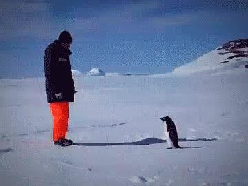 Enlace a No te atrevas a meterte nunca con un pingüino