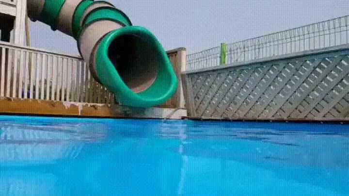 Enlace a Perro disfrutando al máximo de la piscina