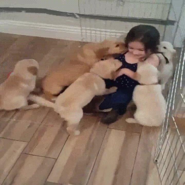Enlace a Niña pequeña siendo atacada por adorables cachorros