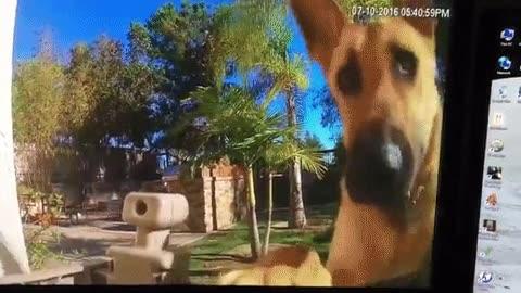 Enlace a La reacción de mi perro al instalar una cámara en casa