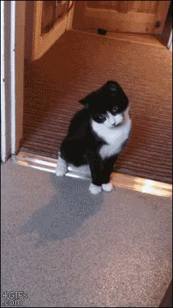 Enlace a Gato tremendamente asustado de la mano de su dueño