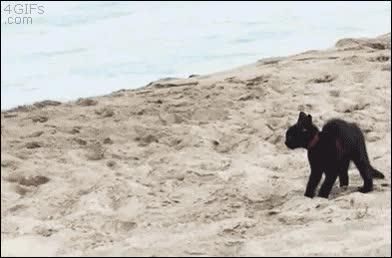 Enlace a Gato con pánico a las olas del mar