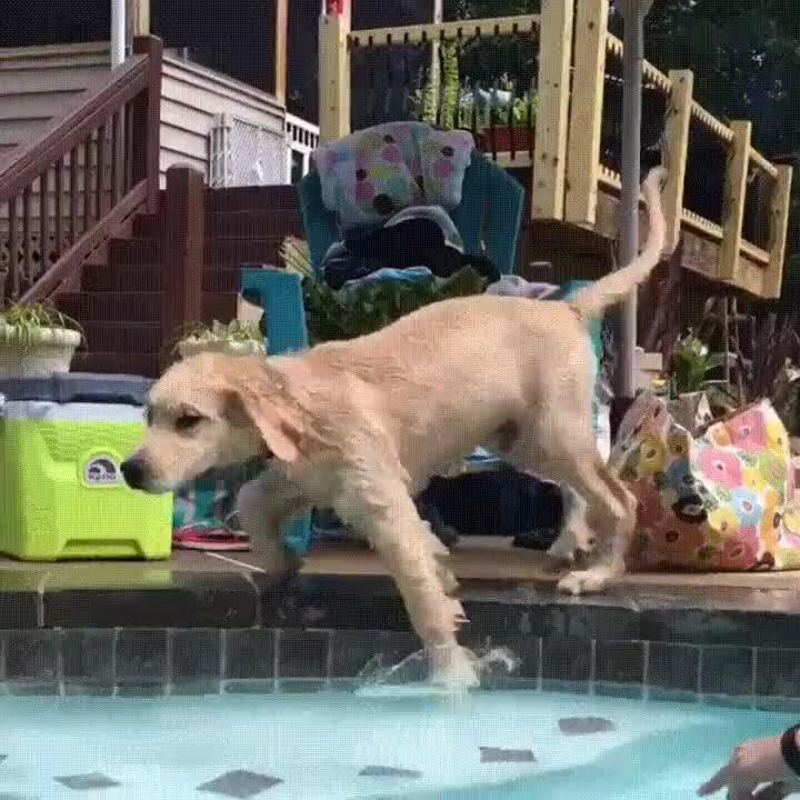 Enlace a Perro con un extraño don para resbalar en la piscina