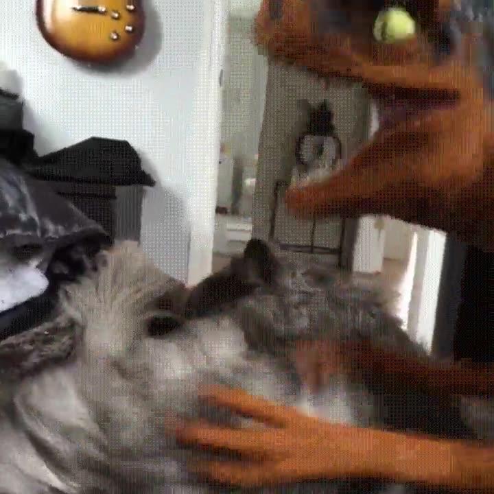 Enlace a Creo que mi gato se lleva un poco mal con el velociraptor