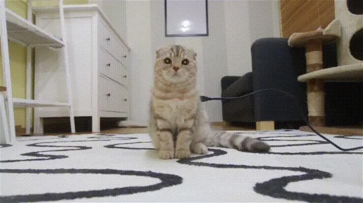 Enlace a Cuando pones a cargar tu gato electrónico