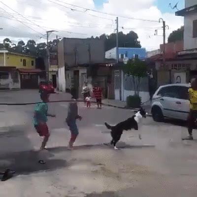 Enlace a Perros que han aprendido a divertirse con juegos de niños