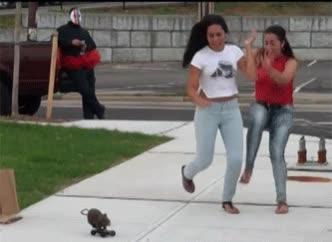 Enlace a Una rata en monopatín. La criatura más terrorífica del mundo
