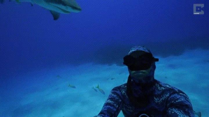 Enlace a Cuando te estás tomando una selfie y viene un tiburón a darte un cabezazo