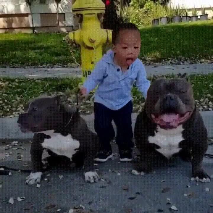 Enlace a Niño imitando la cara de sus simpáticos perro