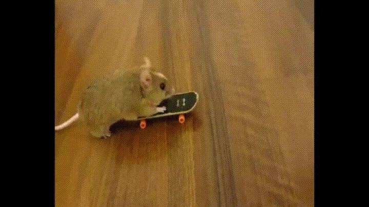 Enlace a Este ratón patina mejor que muchos de nosotros