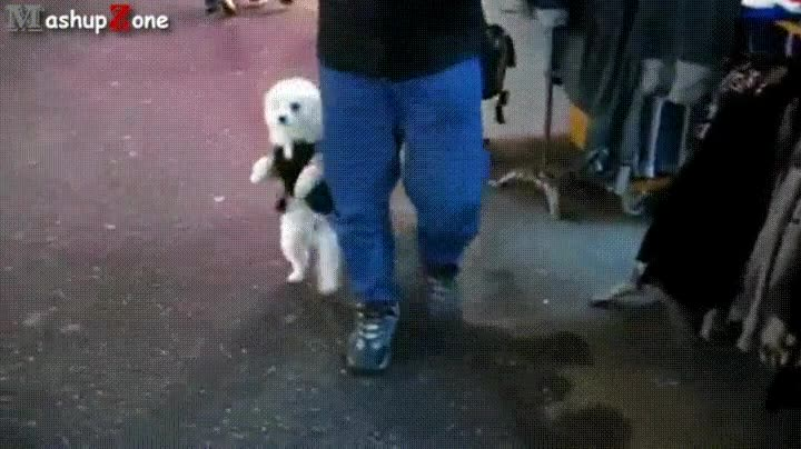 Enlace a Perro que fue un humano en una vida anterior