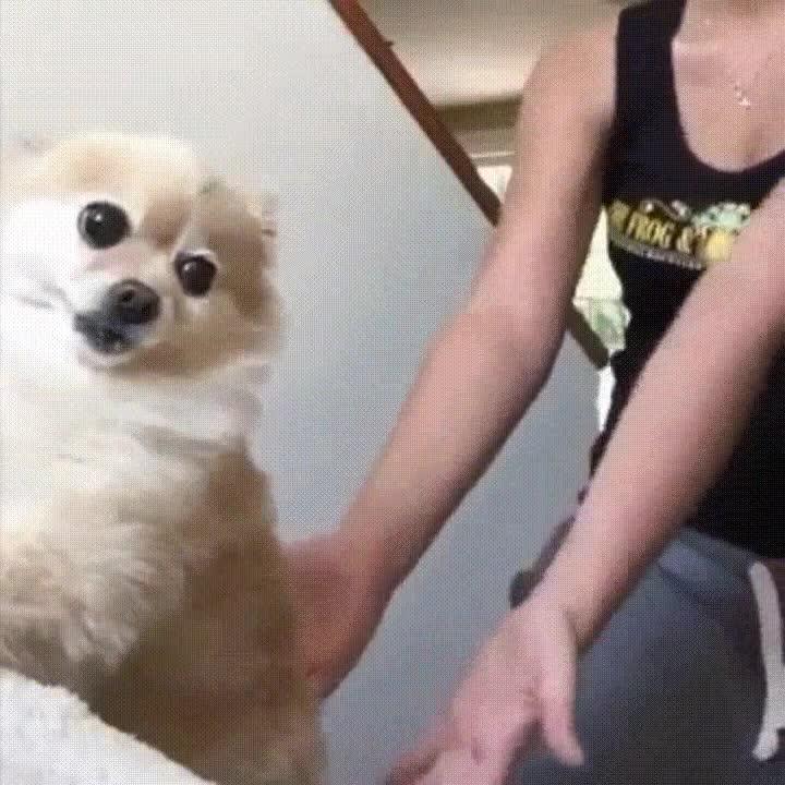 Enlace a Perro ejecutando un salto de fe