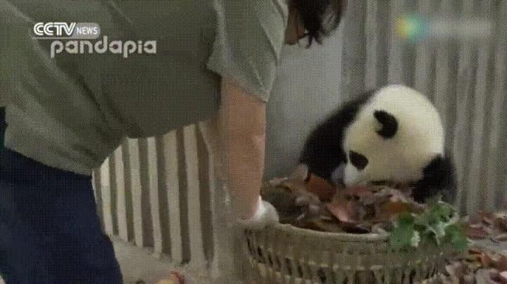 Enlace a ¡He dicho que te apartes de mi cesta!