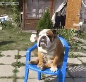 Enlace a El elegante estilo de un bulldog para sentarse en una silla