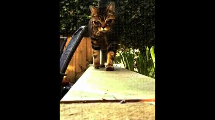 Enlace a El misterioso caso del gato con los ojos de un alien