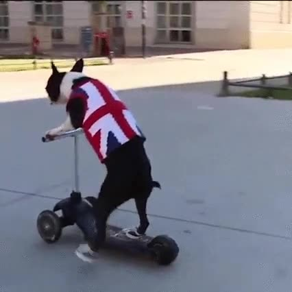 Enlace a El perro con más estilo del mundo para ir en patinete