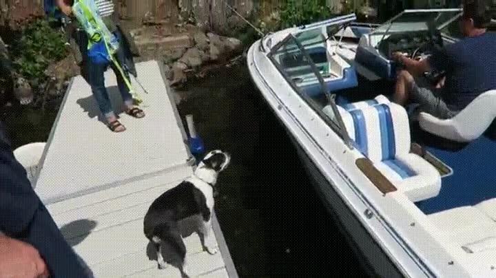 Enlace a Solo un salto separa a este perro de la gloria