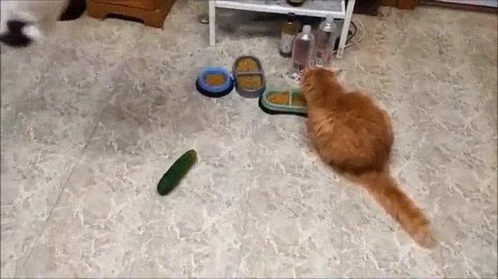 Enlace a La forma más fácil de asustar a tu gato