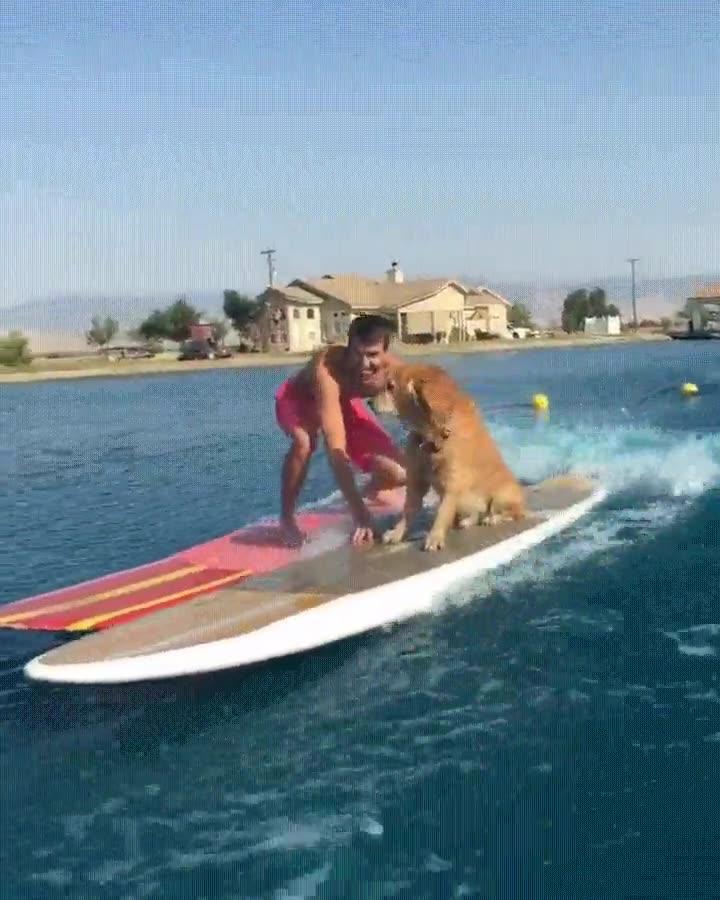 Enlace a Decididamente, el perro tiene más estilo que el ser humano para surfear