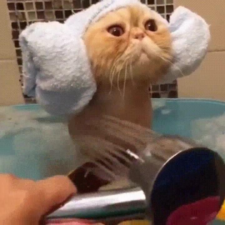Enlace a Ha llegado la hora del baño para la Princesa Leia gatuna
