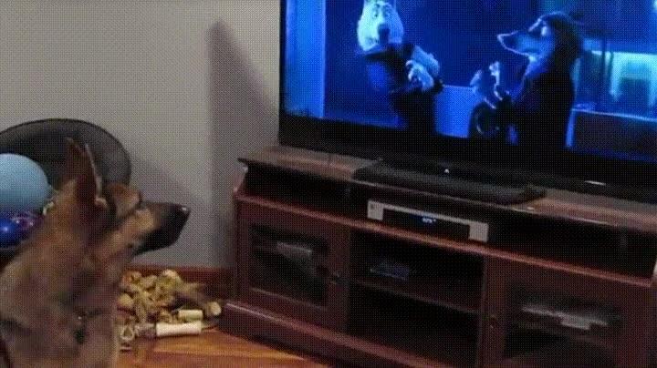 Enlace a Perro imitando de forma adorable lo que sucede en la pantalla