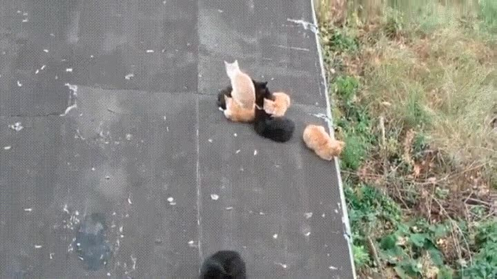 Enlace a Gatos que se sientan donde les da la gana