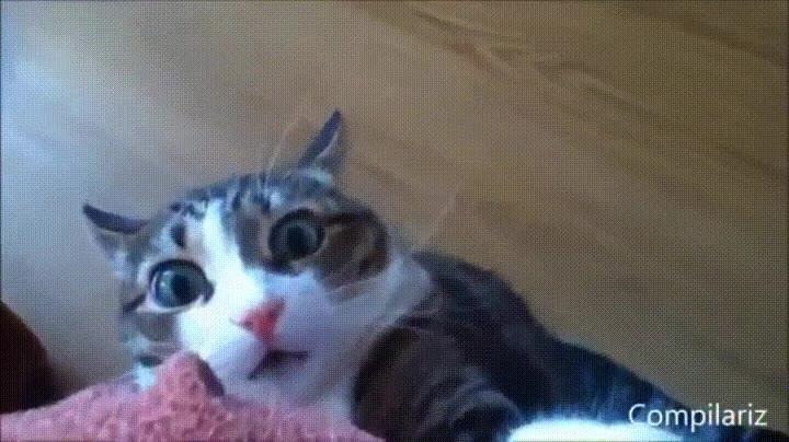 Enlace a Cuando pillas a tu gato planeando cocas chungas