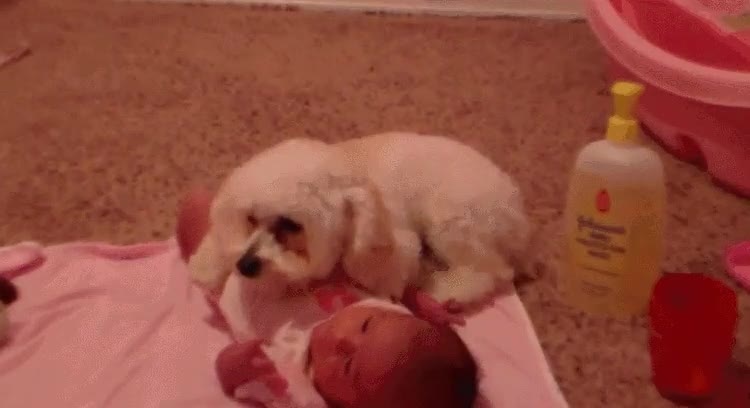 Enlace a Perro protegiendo a un bebé del malvado aspirador