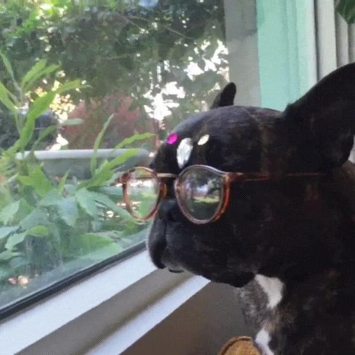 Enlace a Cuando tu perro espera a que vuelvas del trabajo