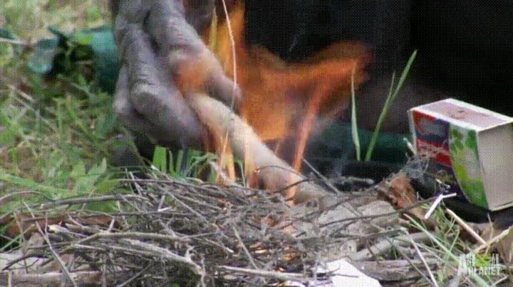 Enlace a Monos que han descubierto la comodidad del fuego y las cerillas
