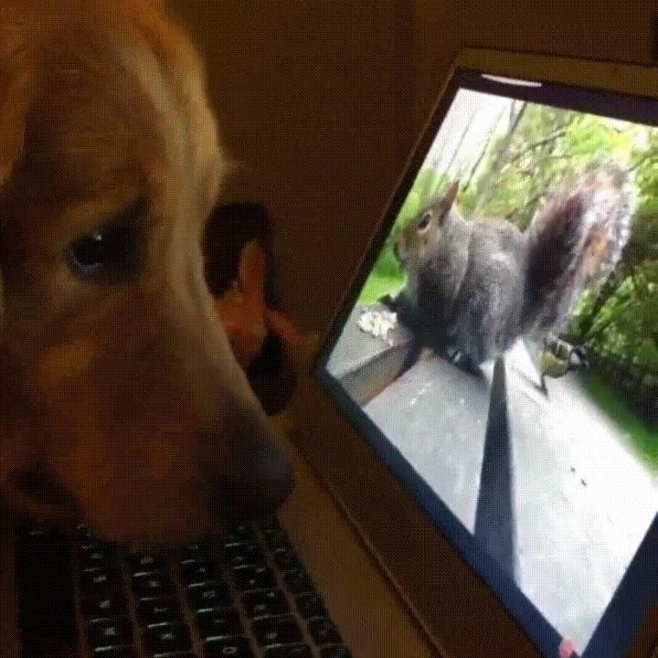 Enlace a Perros muy enganchados a los documentales de naturaleza