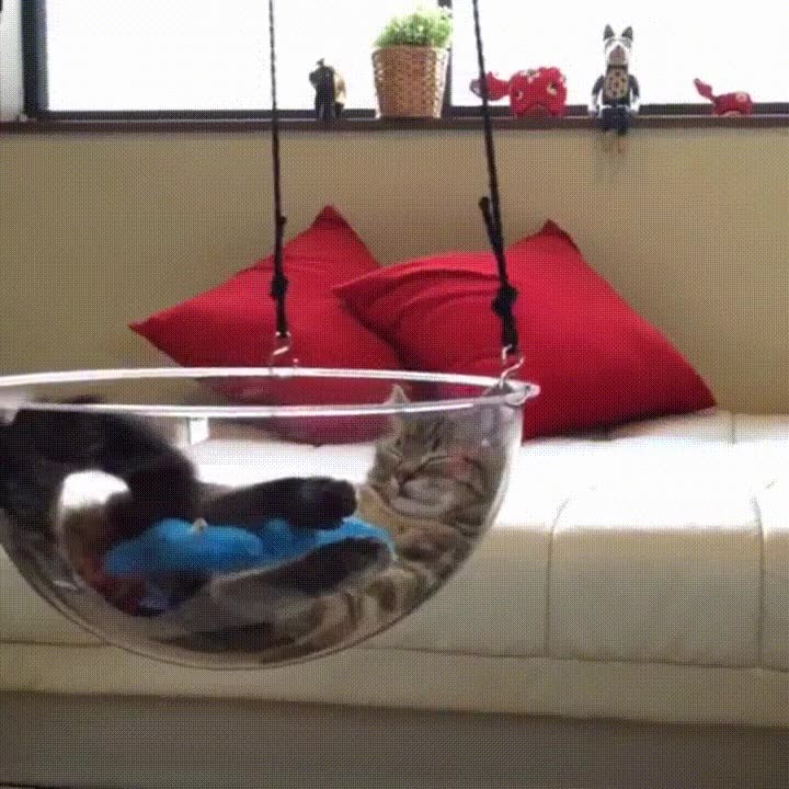 Enlace a El mejor lugar para que tu gato haga la mejor de las siestas