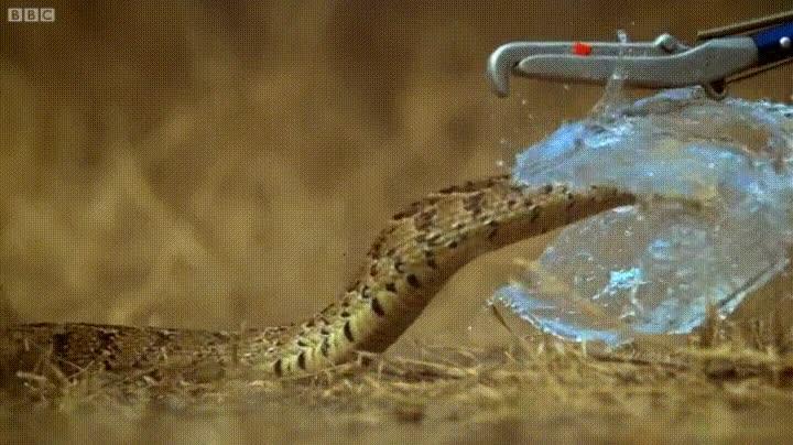 Enlace a El momento exacto en el que una serpiente hace explotar un globo de agua
