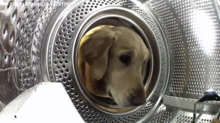 Enlace a Perro salvando a su amigo de peluche de los peligros de la lavadora