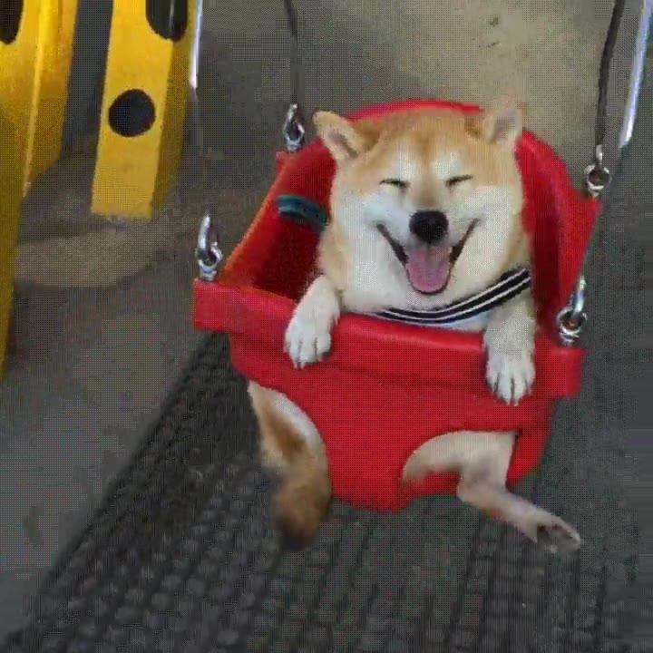 Enlace a Cuando llevas a tu perro al parque y se convierte en el perro más feliz del mundo