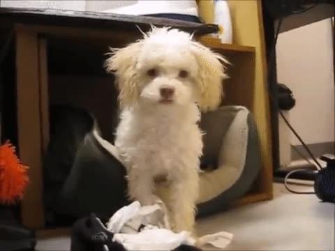 Enlace a Cuando tu perro comprende que lo mejor es no dejar testigos con vida