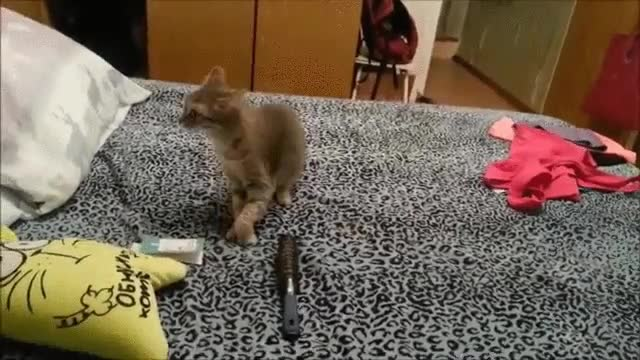 Enlace a Un estornudo de gato es lo más terrorífico para otro gato