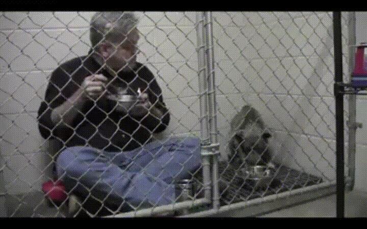 Enlace a Veterinario comiendo en una jaula para que un perro pierda el miedo