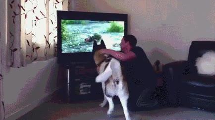 Enlace a Perro que quiere salva a un humano de las garras de un oso