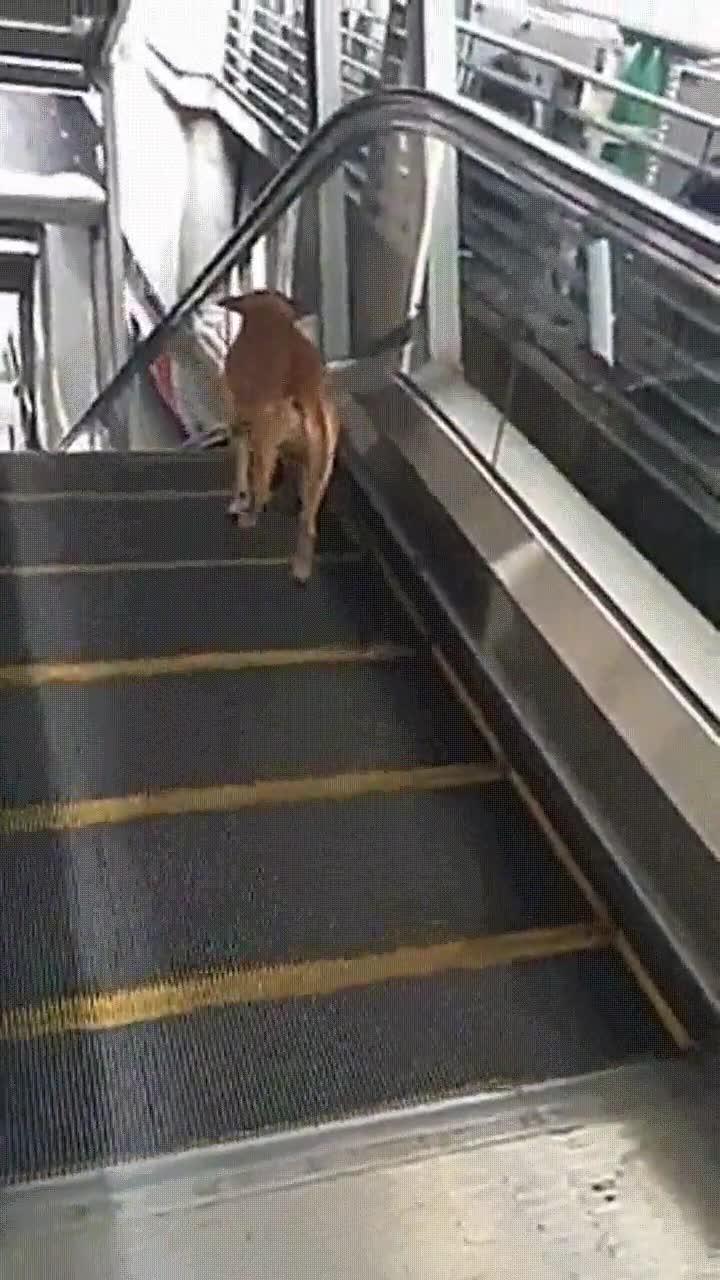 Enlace a Este perro ha encontrado la mejor manera de ponerse en forma