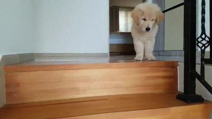 Enlace a ¿Escaleras? No, gracias