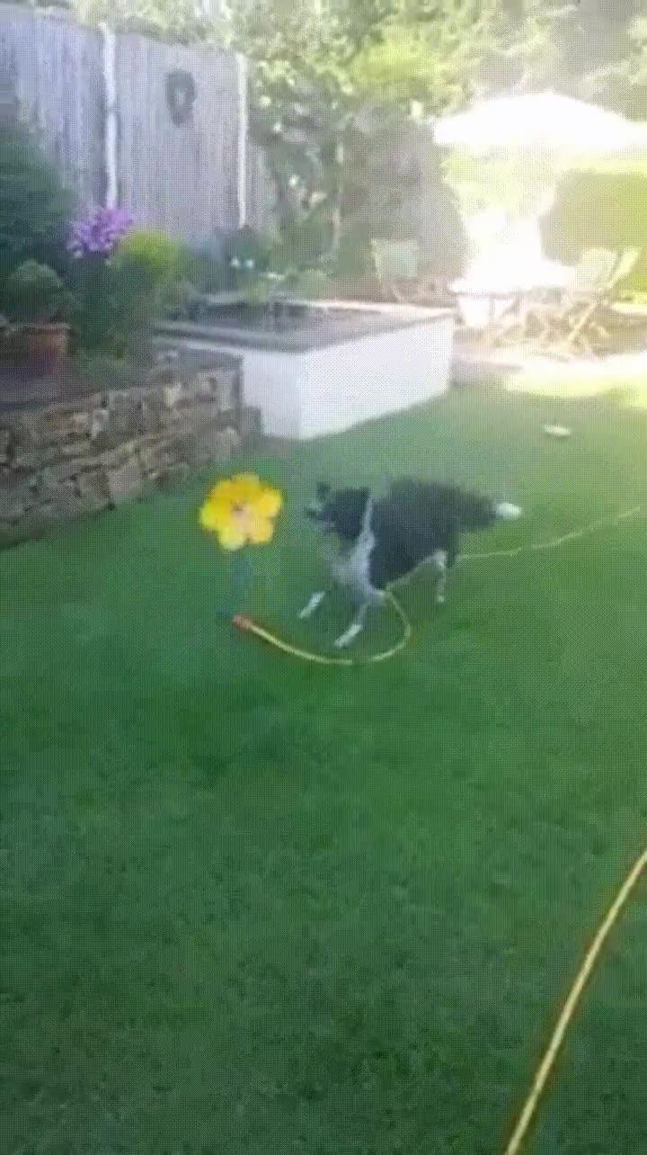 Enlace a El juguete favorito de mi perro en esto días tan calurosos