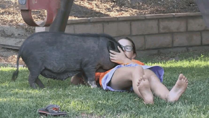 Enlace a El mejor amigo de esta niña es un cerdo, literalmente