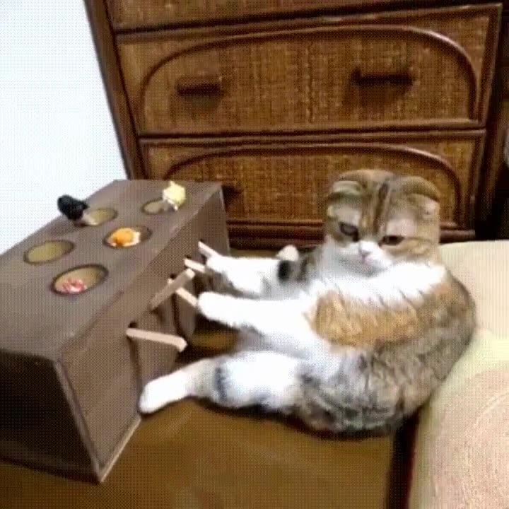 Enlace a Gato no muy impresionado con su nuevo juguete