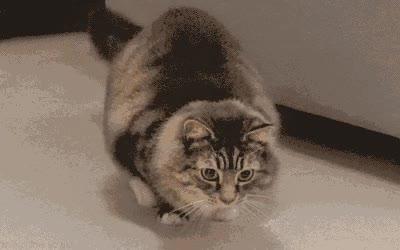 Enlace a Gatos que bailan mejor que Shakira