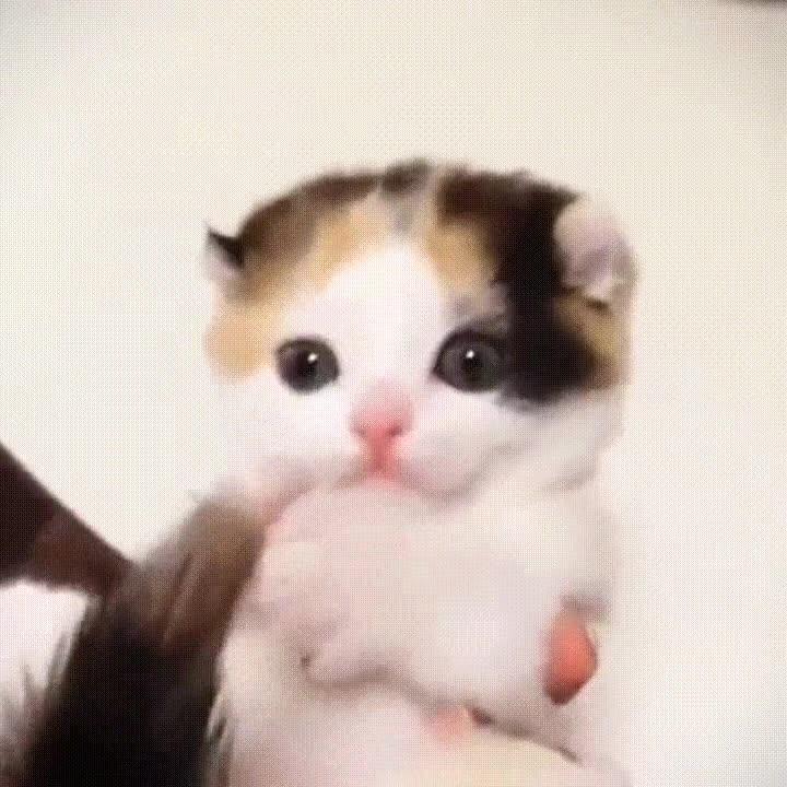 Enlace a El momento cucki del día protagonizado por este lindo gatito