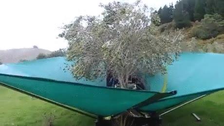 Enlace a De toda la vida la oliva se coge haciendo twerking