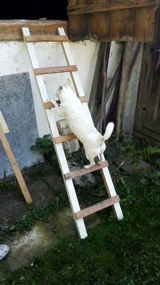 Enlace a Ver a un gato y perseguirlo hasta el infinito y más allá