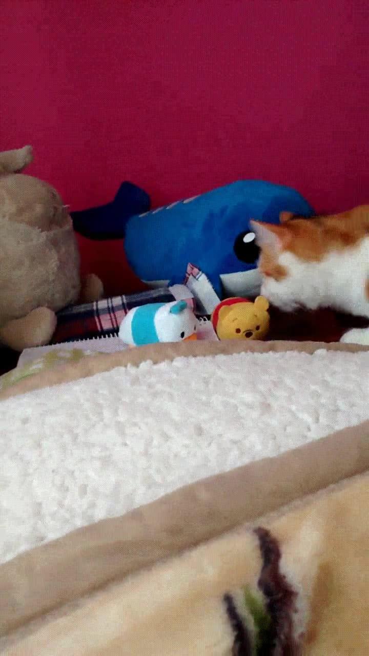 Enlace a Gato salvaje atacando a un pobre oso